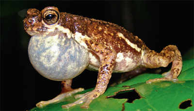 Tree toad to be mapped this monsoon