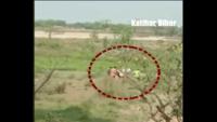 Watch: Hospital staff dump covid positive bodies in river in Katihar, Bihar