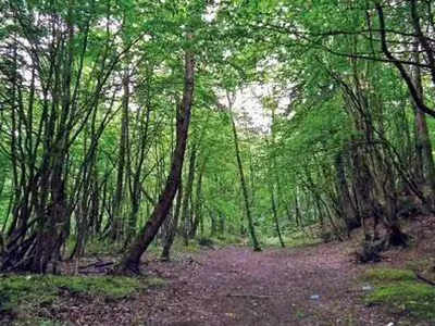 'Forest, tree cover increases by 8,021 sq km over last two years in India'