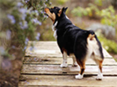 Pet Puja: Why you owe your dog a stimulating walk