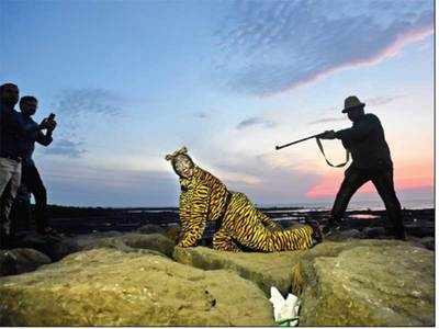 Tigress Avni's blood laid at minister of forests Sudhir Mungantiwar's doors