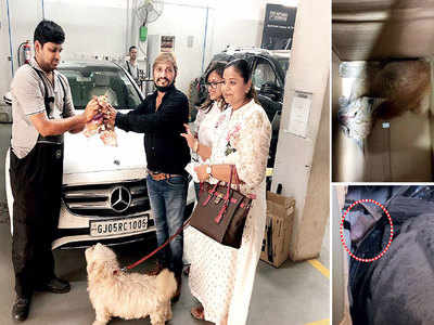 Bizman gets Merc partly disassembled to rescue cat