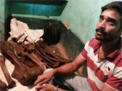 Jumbo bones seized, 'seller' held