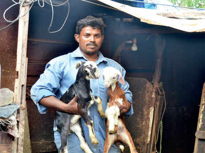 Encroachers around Bellandur lake will be rehabilitated in apartments in Marathahalli but there's a peculiar problem — their goats