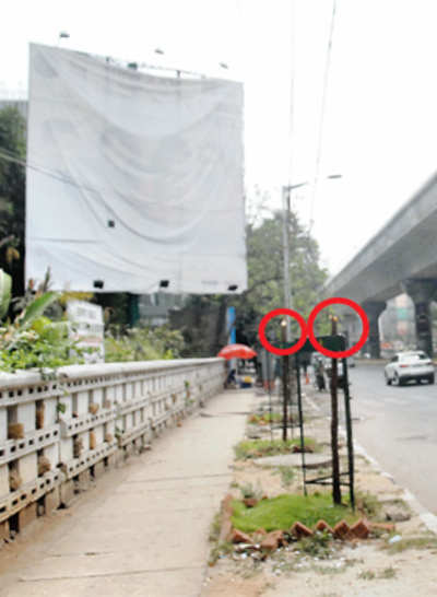 15 trees axed to better view of ad hoarding