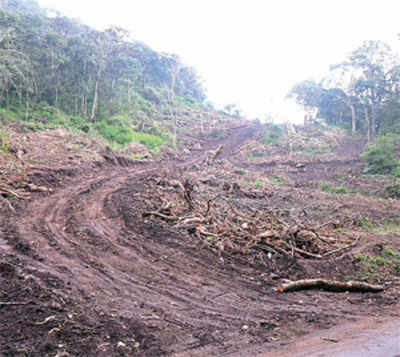 Sedition charge on activist who protested tree-felling