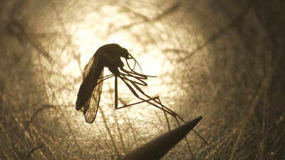 City's dengue deaths twice that of 2018