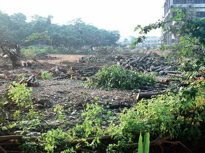 Can't cut trees in 1,280 acres of Aarey: Environmentalist