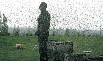 Another funeral attacked by bees