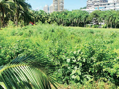 Mumbai's own Miyawaki forests, BMC project of creating urban forests, is flourishing