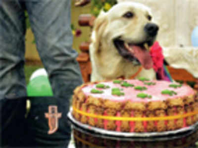 Healthy treats for dogs this season