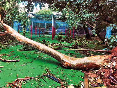 Rain fury: Scores of garden trees uprooted