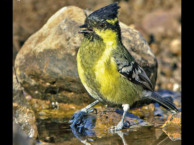 Shadow of death hangs over birds of Sinhagad Valley