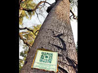 Delhi: 6000 trees in NDMC area to get QR codes