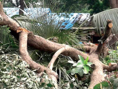 Aarey locals protest tree-cutting, detained