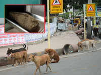 Shocking! 8-year-old boy attacked by stray dogs, dies