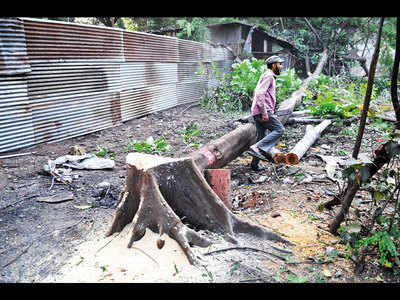 'PMC's tree authority favours contractors'