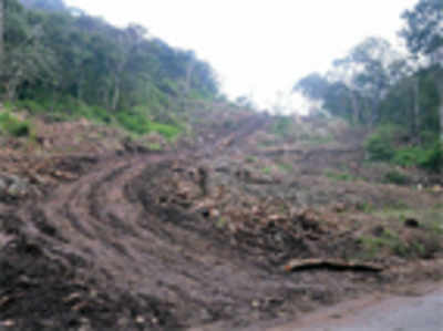 Axe on 50K trees to light up Kerala