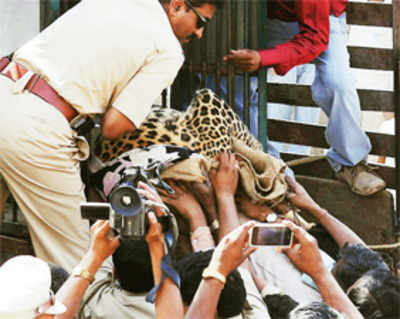 U'Khand to take local tips on handling wildlife clashes