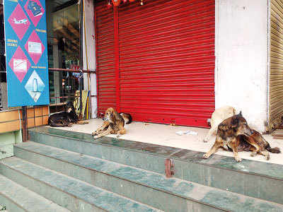 Residents in KCB areas seek solution for strays