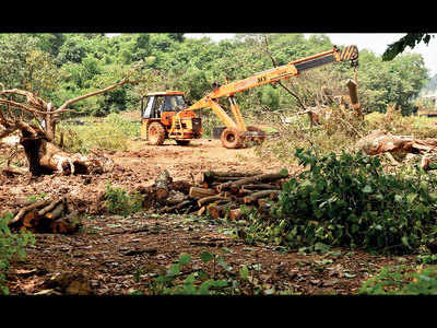 Don't cut any more trees at Aarey: Supreme Court