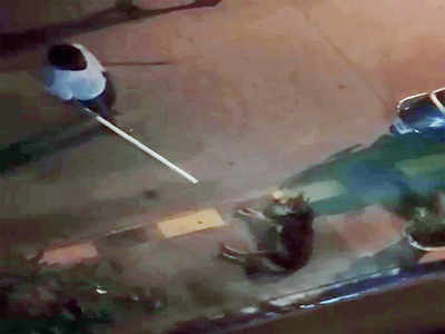 Man beats strays to pulp in Covid-fury