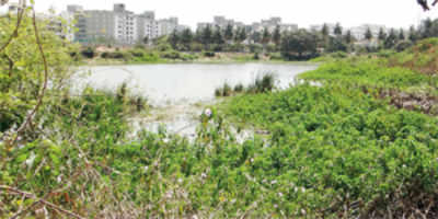 25,000 fishes to clean up & rejuvenate Whitefield lake