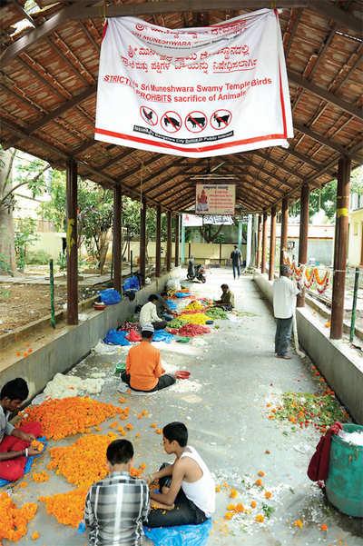 R.I.P., Muneshwara temple's animal sacrifice