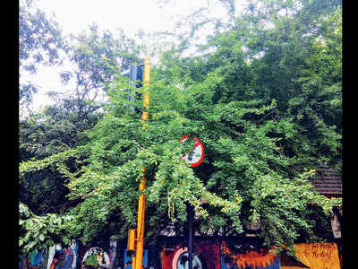 Branches block traffic signal in Bandra