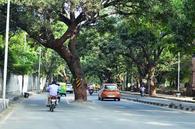 Greenocide to start in February in Bengaluru