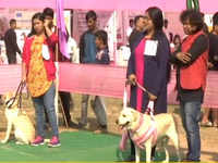 Watch: Guwahati hosts all-breed dog show to promote adoption of local breeds