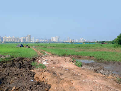 The assault on Mumbai's salt lands