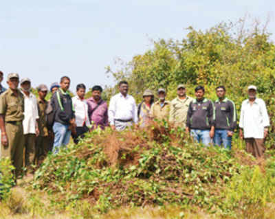 Forest dept to nip new exotic fauna in the bud