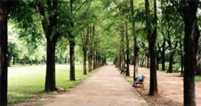 Needed: Rs 80k for city's trees