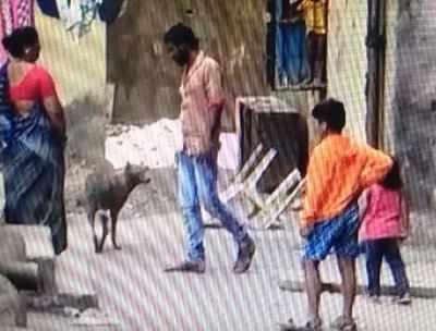 Dog beaten to death in suburban Mumbai