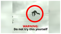 On cam: Man walks on high-tension wire to remove a branch