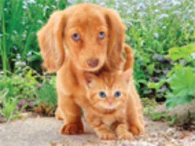 It's official! Cats are better than dogs