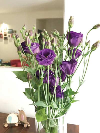 The greenskeeper: Rose of the Prairies