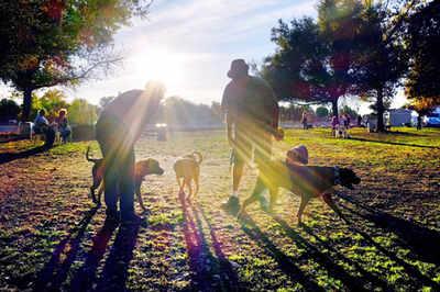 Pet Puja: Dog parks are like Holi