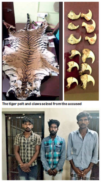 Claws out over tiger poaching