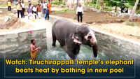 Watch: Tiruchirappalli temple's elephant beats heat by bathing in new pool