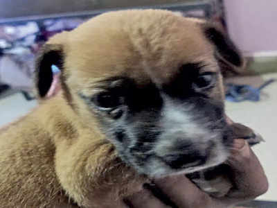 Man suspects 'dog-hater' had role in pup's death