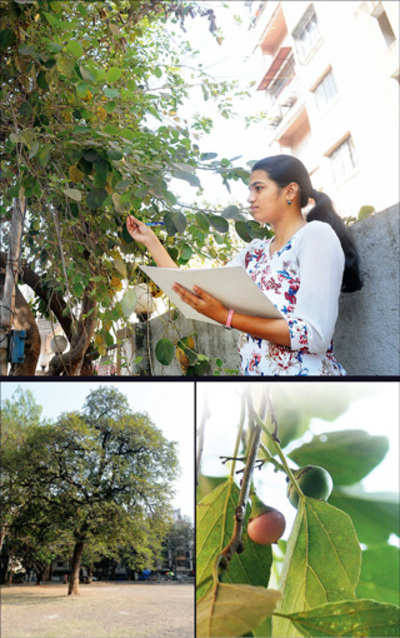 The forgotten wild fruits of Pune