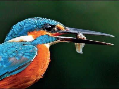 Spark Bird