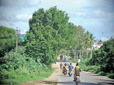 Road widening gets a nod; 1,792 trees to be axed soon