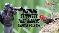 Birding etiquette that birders should follow