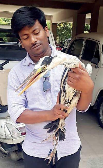 Bengaluru's: After dead fish were found floating near Madiwala Lake, activists spot dead turtles near Puttanahalli Lake