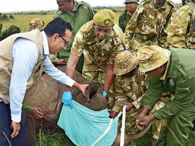 Excess salt in water killed 11Kenya rhinos: Report