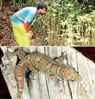 City researchers find a new gecko in Eastern Ghats