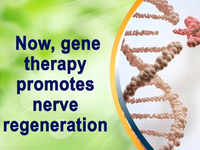 Now, gene therapy promotes nerve regeneration